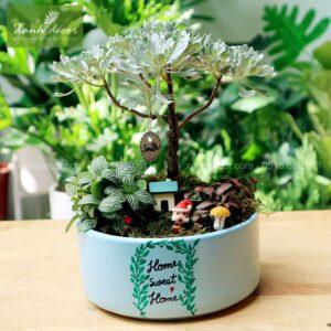 quà tặng, quà tặng sinh nhật, tặng quà cây, quà tặng cây để bàn, cúc mốc, mua cây cúc mốc hà nội