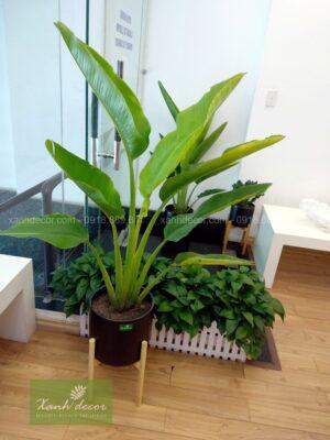 plantstand, kệ gỗ để cây, giá gỗ để cây, plantstand, kệ gỗ để cây hà nội, địa điểm bán kệ gỗ