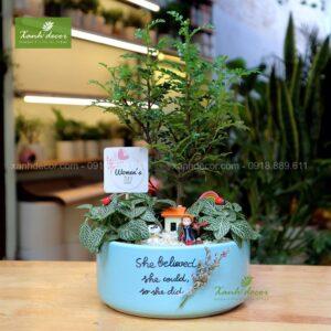 Cây mộc hương, mộc hương hà nội, cây mộc hương mua ở đâu, tiểu cảnh mộc hương, terrarium mộc hương, quà tặng, quà tặng cây xanh