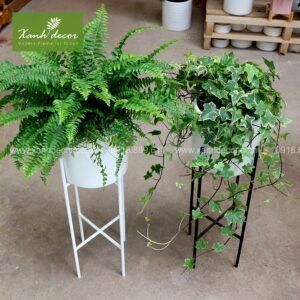 plantstand, kệ sắt để cây, giá sắt để cây, plantstand, kệ sắt để cây hà nội, địa điểm bán kệ sắt