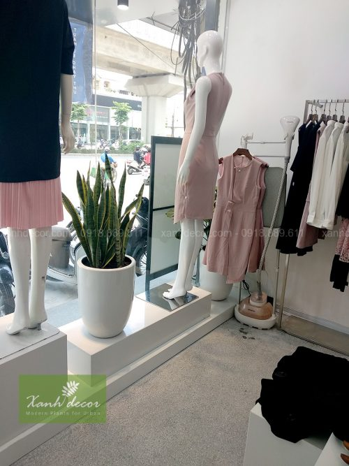 Cây lưỡi hổ trang trí cửa hàng thời trang